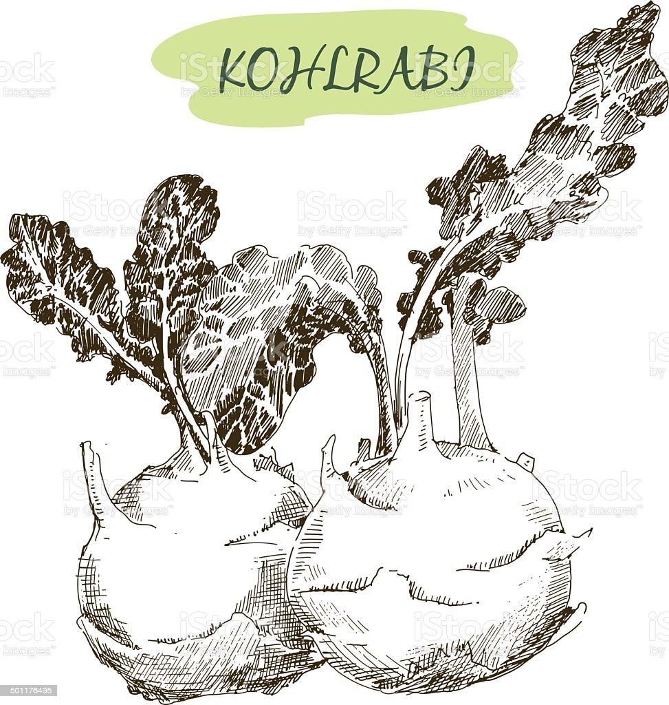 Kohlraby vector art illustration