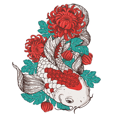 Koi carp and chrysanthemum flowers. Vector illustration. Tattoo print. Hand drawn illustration for t-shirt print, fabric and other uses.