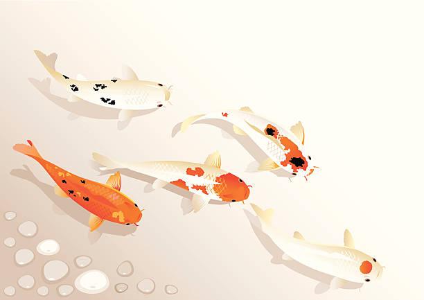 stockillustraties, clipart, cartoons en iconen met koi family - carp
