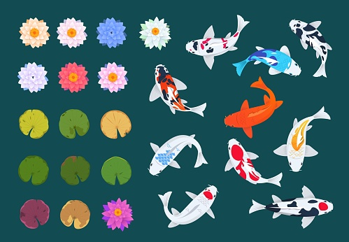 Koi fish and lotus. Japanese carp, flowers and leaves of water lilies. China asian traditional vector set