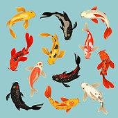 Koi fish beautiful swim oriental pattern design. Japanese carp in water. Vector flat style cartoon illustration isolated on light blue background