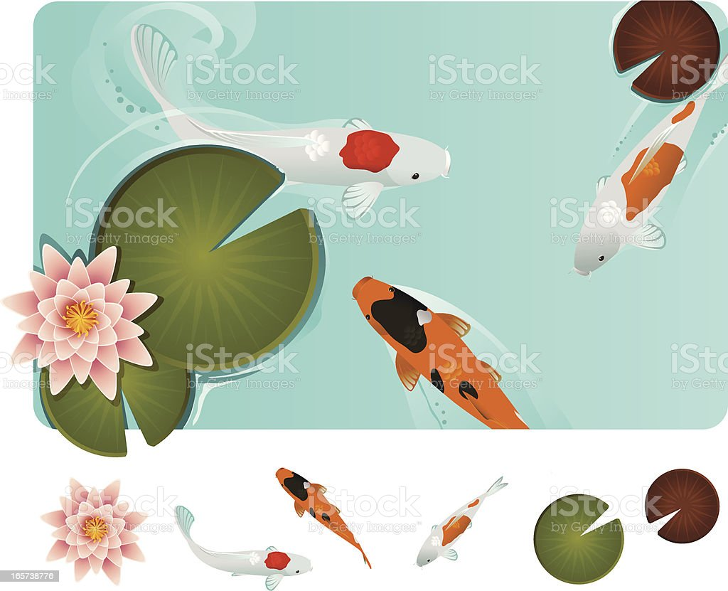 Koi fish in blue water with Lilly pads vector art illustration