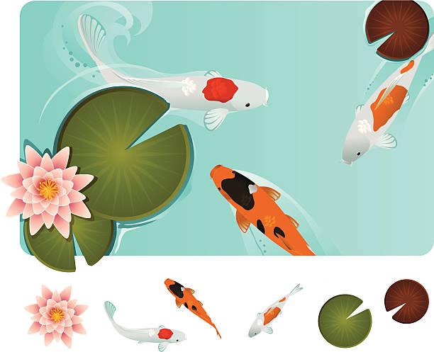 koi-fische im blauen wasser mit lilly pads - seerosenteich stock-grafiken, -clipart, -cartoons und -symbole