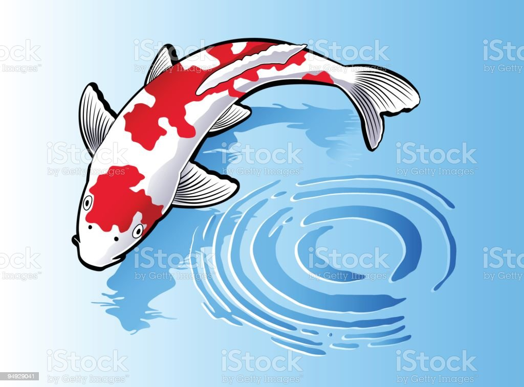 Koi fish swimming in blue water stock vector art more for Koi fish vector