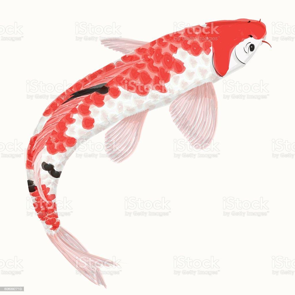 Koi rainbow carp. Hand drawn fish isolated vector art illustration