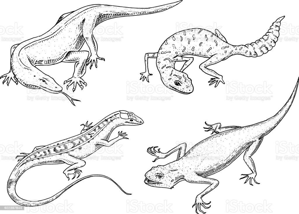 ヘビエキゾチックな爬虫類やアメリカの砂トカゲ コモドドラゴン モニター