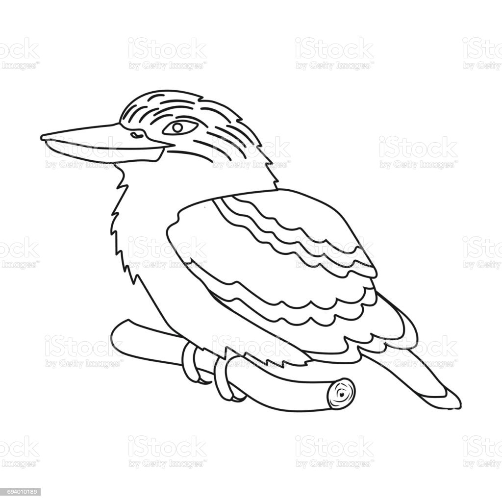 Line Drawings Of Australian Animals : Kookaburra sitting on branch icon in outline style