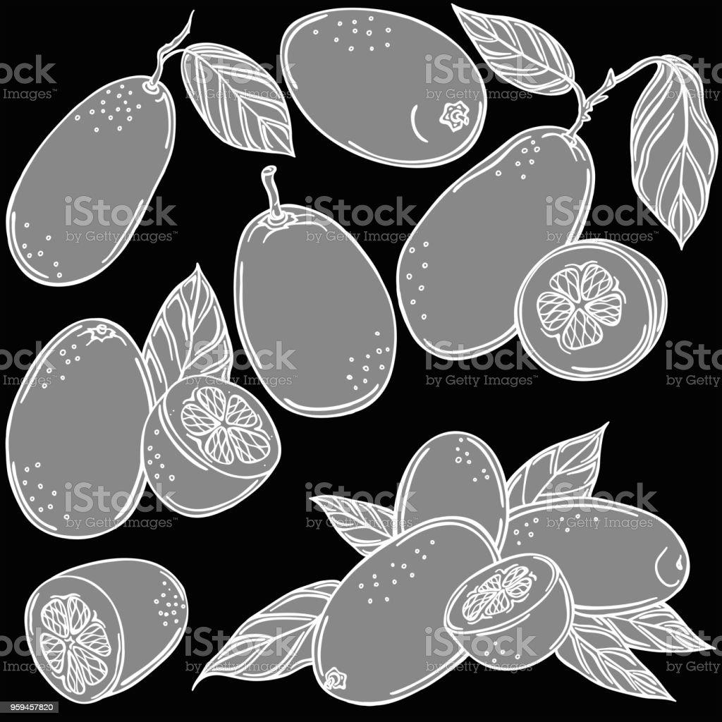 Kumquat fruit vector illustration, vector vector art illustration