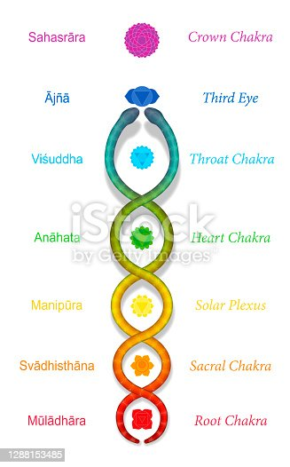 istock Kundalini serpent or coiled snake ascending along the seven main chakras, with sanskrit names. Symbol for spiritual power and balance, awakening, harmony and relaxation. Vector on white. 1288153485