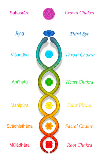 Kundalini serpent or coiled snake ascending along the seven main chakras, with sanskrit names. Symbol for spiritual power and balance, awakening, harmony and relaxation. Vector on white.
