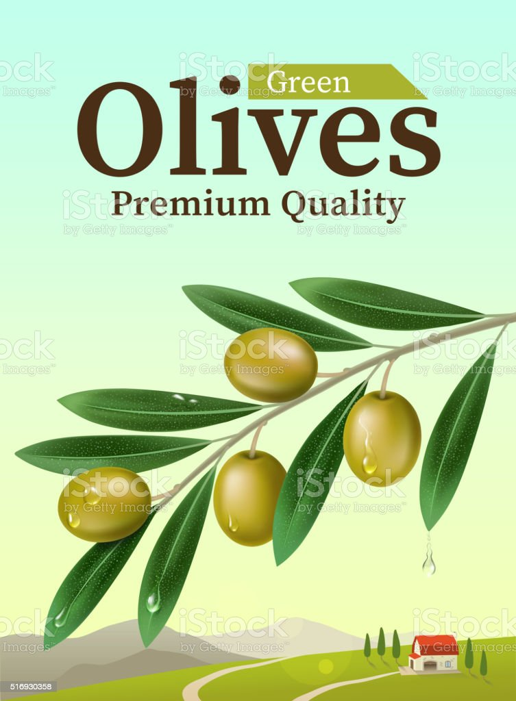 Label of green olives. Realistic Olive branch
