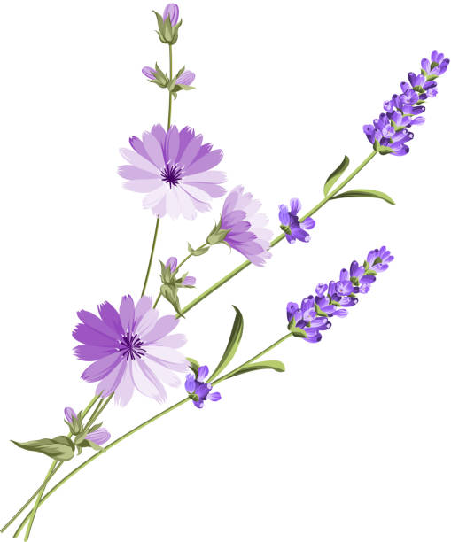label with lavender - wildflowers stock illustrations, clip art, cartoons, & icons