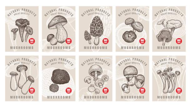 버섯과 레이블이 설정합니다. - 버섯 stock illustrations