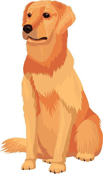 ilustrações de stock, clip art, desenhos animados e ícones de cão raça labrador retriever - lian empty