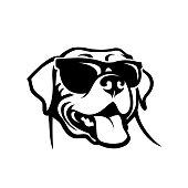 Labrador retriever dog face wearing sunglasses