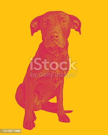 Engraving illustration of a Labrador Retriever dog in animal shelter hoping to be adopted