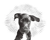 Engraving illustration of a Labrador Retriever puppy dog in an animal shelter hoping to be adopted