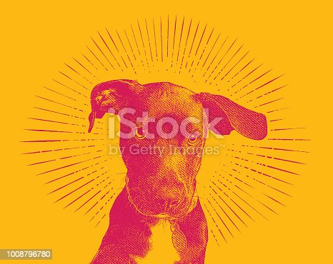 istock Labrador Retriever puppy dog in an animal shelter hoping to be adopted 1008796780