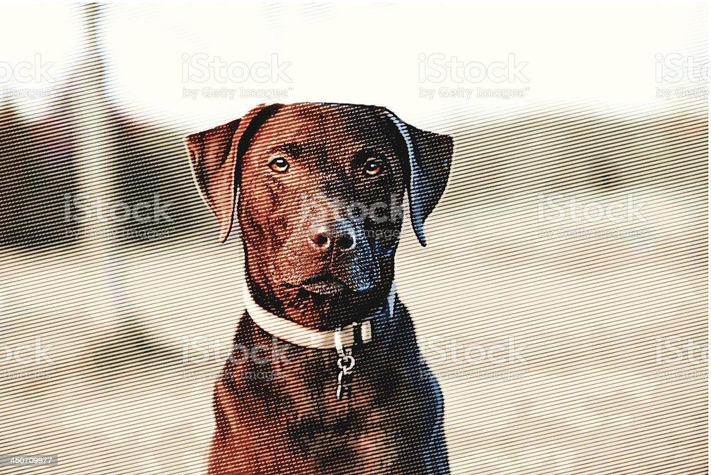 Labrador Retriever royalty-free stock vector art