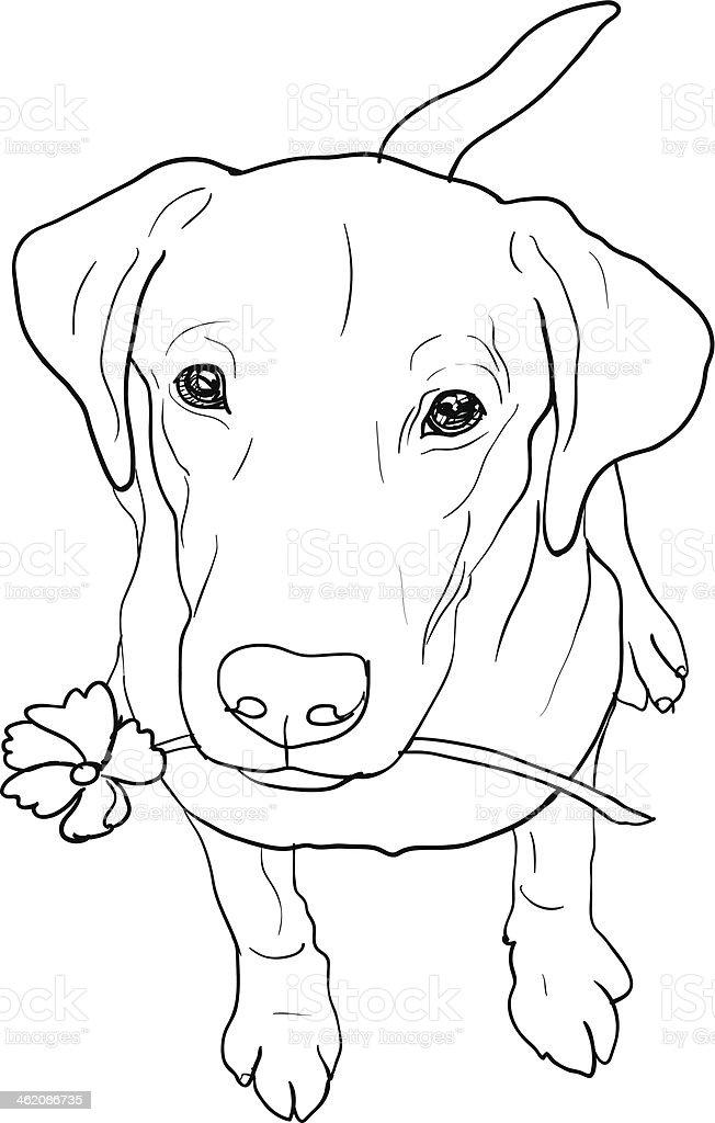 Labrador Retriever Stock Vector Art & More Images of Animal ...