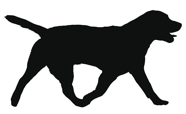 Labrador Retriever Clip Art, Vector Images & Illustrations ...