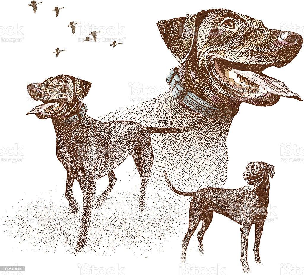 Labrador Retrievers et des oies Gravure à l'eau forte - Illustration vectorielle