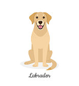 Vector illustration of cute big yellow sitting dog in flat style. Isolated on white
