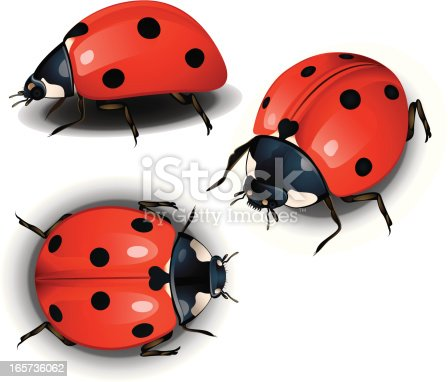 Three different angle Lady bug,very useful to create animation, print and game .