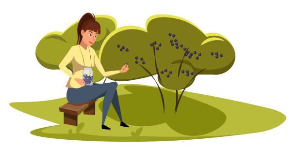 ilustrações de stock, clip art, desenhos animados e ícones de lady picking berries flat vector illustration - picking fruit