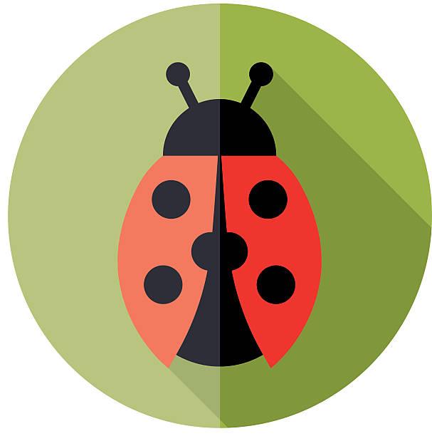 ladybird flat icon vector art illustration