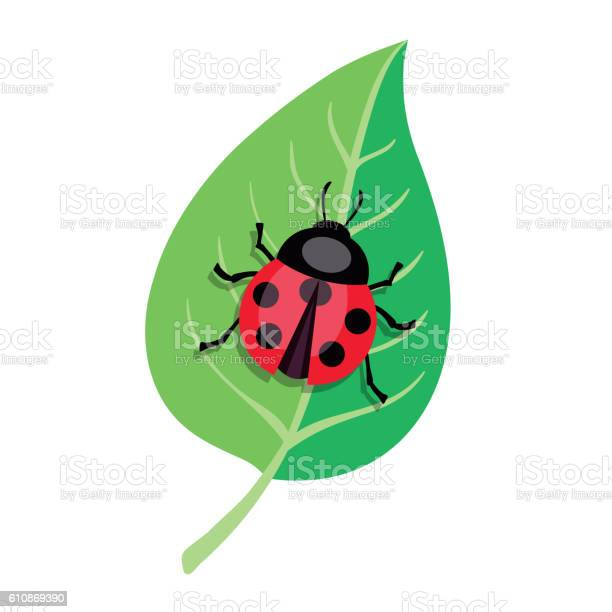 Ladybug crawling on a green leaf color vector illustration vector id610869390?b=1&k=6&m=610869390&s=612x612&h=o6wnlkjcvhbfq sbqlk4jltwvakhshelmihrgav46lc=