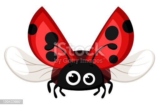 Ladybug close-up, flying on a white background. Insect