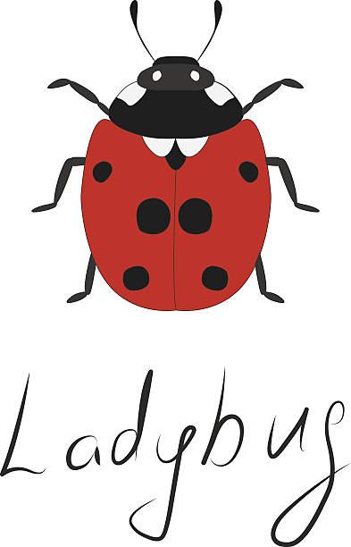 Ladybug icon. Lettering. Hand-drawn insect. – artystyczna grafika wektorowa