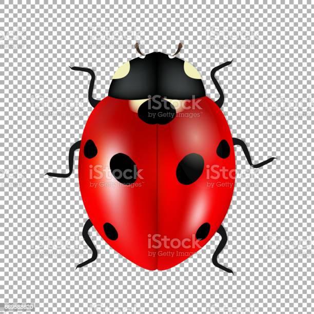 Ladybug isolated in trasparent background vector id669588620?b=1&k=6&m=669588620&s=612x612&h= l6fhb7drn2rg0xhmewl txvkoxxewyh cd8sl6ysfc=