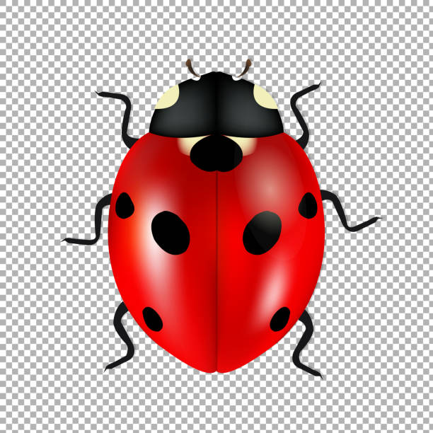 Ladybug Isolated In Trasparent Background – artystyczna grafika wektorowa