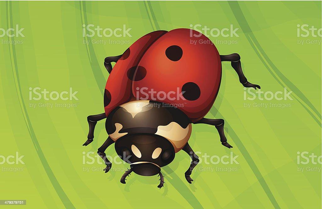Ladybug life cycle royalty-free stock vector art
