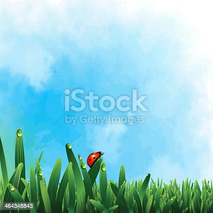 Ladybug on green grass - eps8