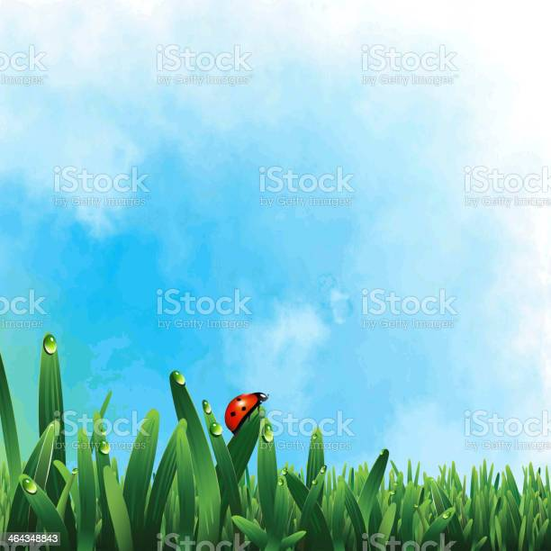 Ladybug on green grass vector id464348843?b=1&k=6&m=464348843&s=612x612&h=mgjcb07qf47qfirc2kywevphaz5yzwxic6guauglirq=