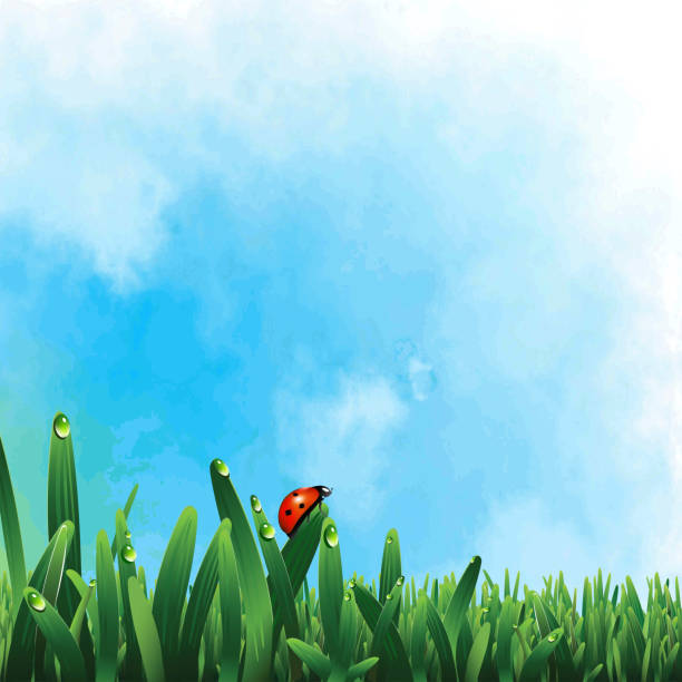 Biedronka na zielonej trawie – artystyczna grafika wektorowa