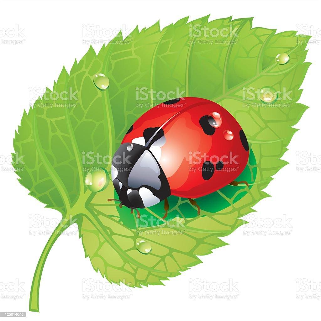 Ladybug on leaf royalty-free stock vector art