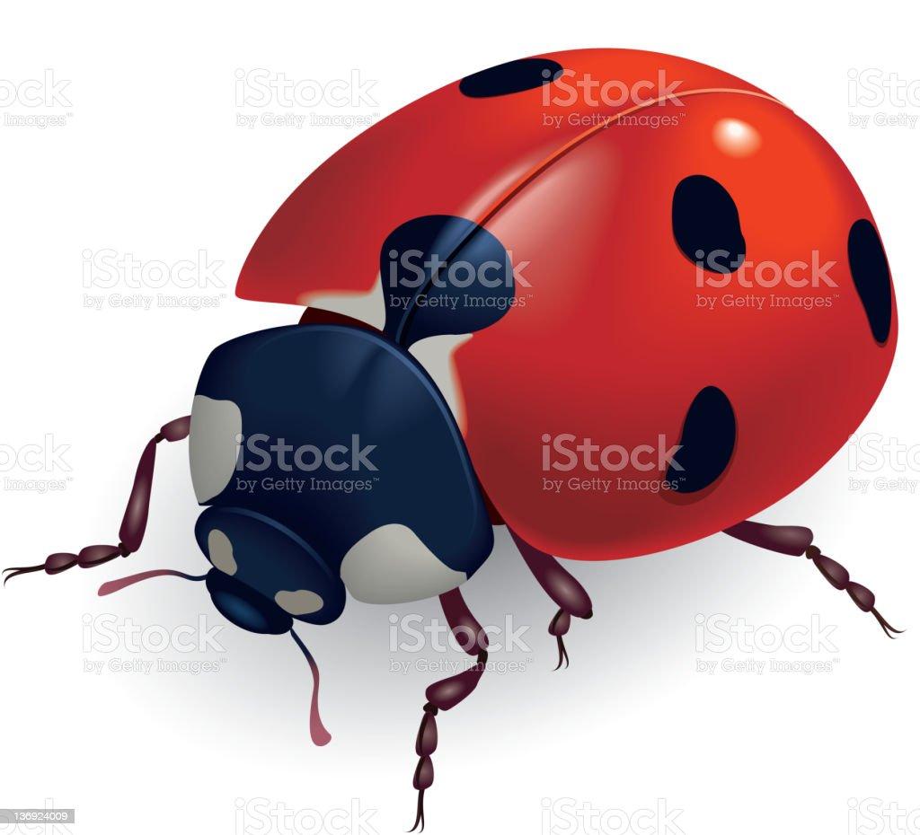 Ladybug. (Lat. Coccinellidae) royalty-free stock vector art