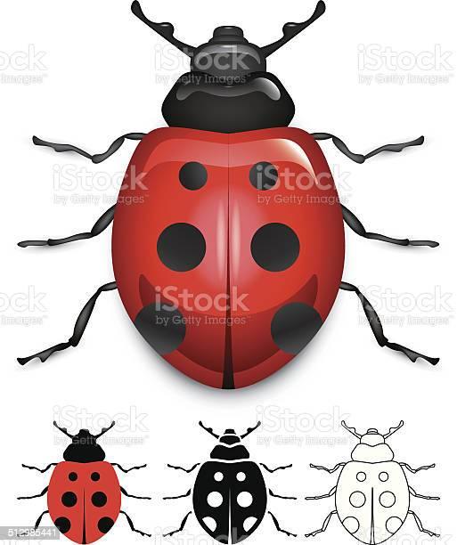 Ladybug vector id512985441?b=1&k=6&m=512985441&s=612x612&h=lifwblm5jb c7vaypapdjiq9r90xwpmssqs3ujkmriy=