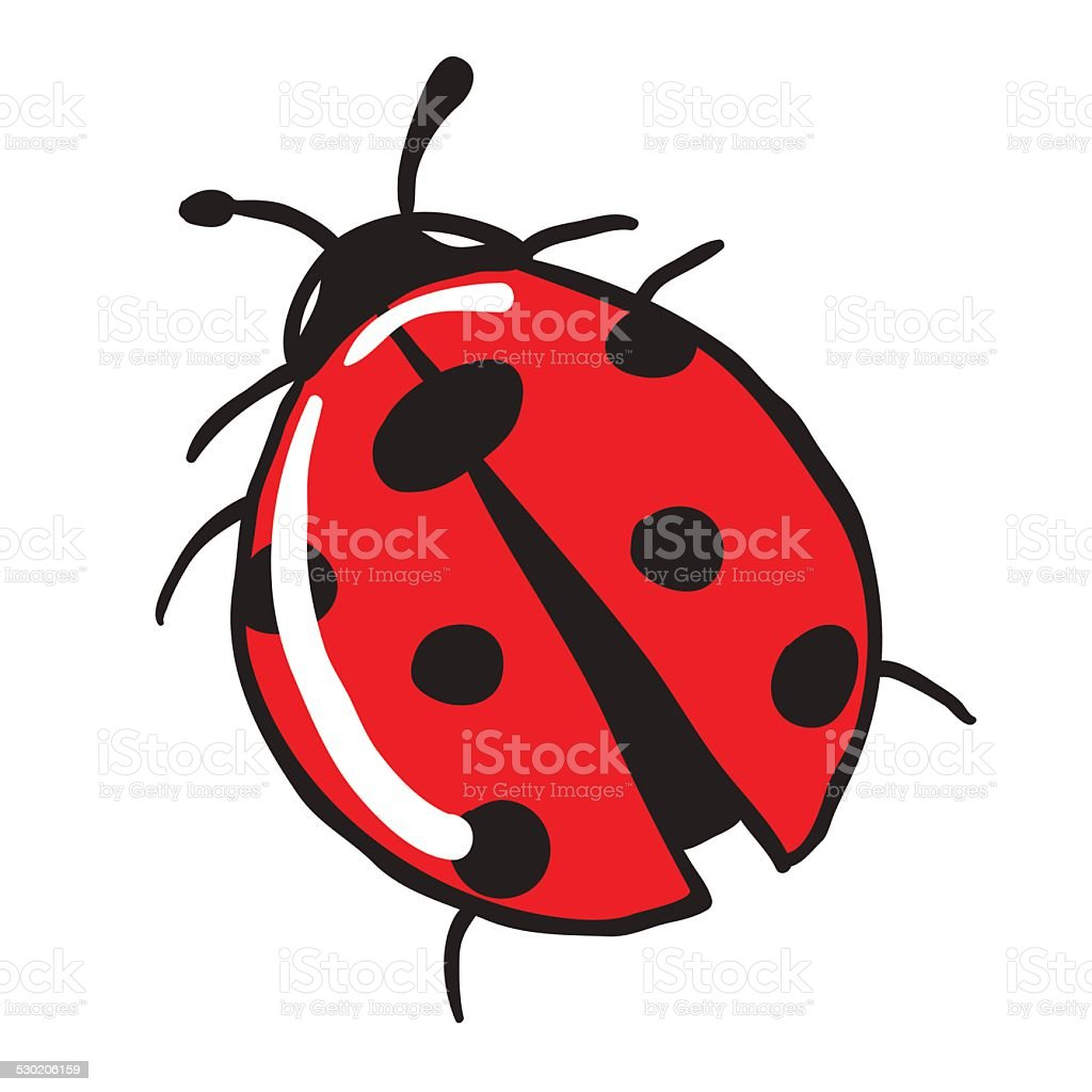 ladybug vector art illustration