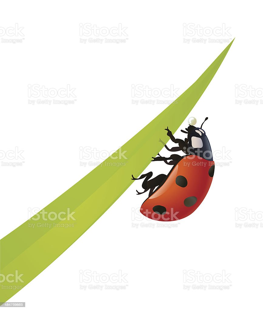 Ladybug with blade of grass vector art illustration