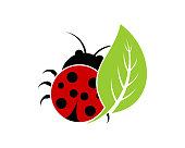 Ladybug with green leaf illustration