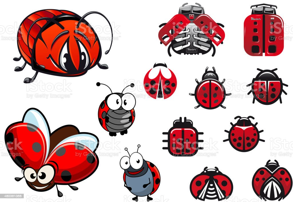 ladybugs ladybirds and beetles cartoon insects stock vector art