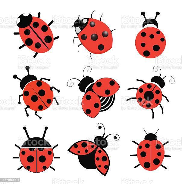 Ladybugs vector id477559924?b=1&k=6&m=477559924&s=612x612&h=f mycielxmb2facyw7esv fxshews1dcsfuzwcagyh0=