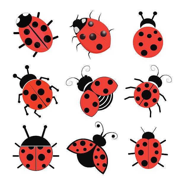 Ladybugs – artystyczna grafika wektorowa