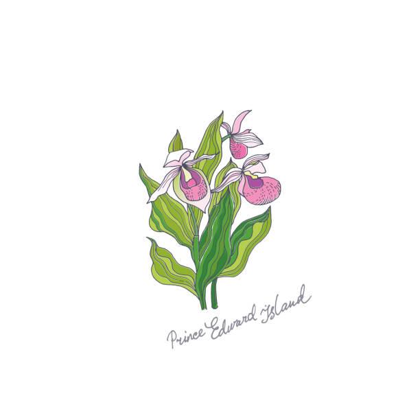 Ladys Slipper. Prince Edward Island vector art illustration