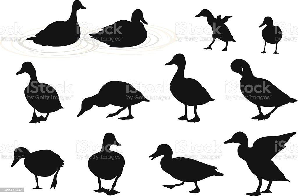 Lake Ducks Vector Silhouette vector art illustration
